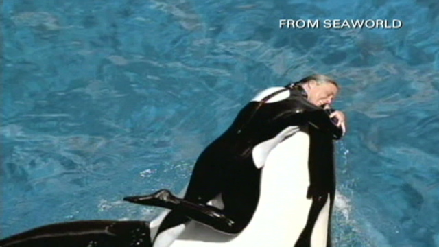 SeaWorld CEO says shows with killer whales will resume